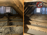 Split picture of an attic with the dirty attic shown on the left, and the same attic after cleaning and removing bat filth and contaminated insulation on the right