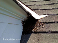Honeybees outside a Birminghamm Alabama home by a second floor window