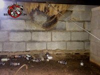 Insect foggers strewn in a crawl space in Alpharetta, but the bees are fine
