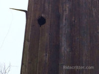 Old rat hole that birds used to get into a building in Birmingham, AL