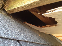 A big hole in the roof soffit of a house in Atlanta allowed squirrels into the home
