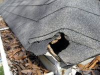 Squirrel hole in the roof of a home in Roswell, Georgia