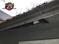 The soffit of a house is hanging down because of water damage caused by the clogged rain gutters