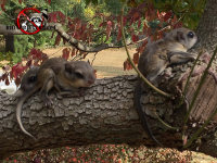 Baby flying squirrels on a tree after being trapped, relocated, and released from a house