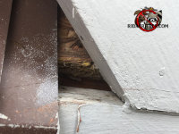 There is a gap in the wooden trim near the roof of a house in Buford Georgia through which rats got into the house