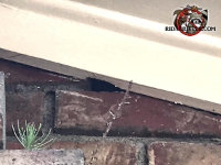 Small flying squirrel hole between the bricks and the wooden roof trim at a house in Woodstock Georgia