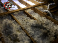 The attic insulation in a house in Roswell Georgia is flattened out and contaminated with animal urine and feces