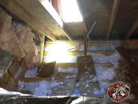 Attic insulation on the walls is torn up and the insulation between the joists is trampled