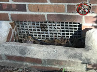 Missing screen behind a metal foundation vent recessed in a well will have to be replaced as part of a Vestavia Hills Alabama mouse control job.