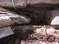 Gap in the foundation where air conditioning pipe was passed through allowed mice into a house in Birmingham Alabama