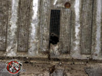 Mice gnawed a dime sized hole through a corroded foundation vent screen to get into the crawl space of a house in Birmingham Alabama.
