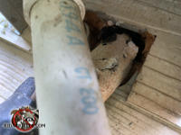Mice climbed up the air-conditioning pipes and through a gap where they passed through the siding to get into a house in Trussville Alabama.
