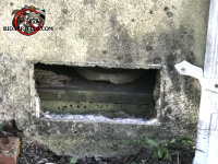 A vent cover fell off the foundation of a house in Villa Rica Georgia and an opossum got in through the opening