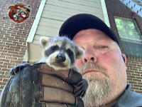 Animal control specialist holding a baby raccoon in his gloved hand after removing it from an apartment house in Birmingham Alabama.