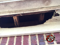 Raccoons made a huge hole in the soffit panel of a house in Dunwoody Georgia