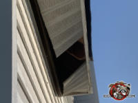 Raccoon knocked out several sections of the metal soffit panel at a house in Flowery Branch Georgia
