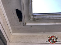 Raccoons tore a hole about six inches by 12 inches in the wooden soffit panel