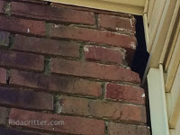 Raccoon entry hole in a brick wall of a house in Hoover, AL