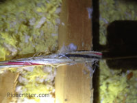 Rats gnawed the insulation off electrical wires in an attic in Birmingham, Alabama
