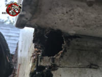 Two inch roof rat hole gnawed through the wooden roof fascia under the rain gutter and into the attic of a house in Leeds Alabama