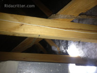 A snake skin up in the rafters found at a Birmingham, AL snake removal job