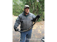 Snake-removal expert with a snake removed from a house in Birmingham, AL