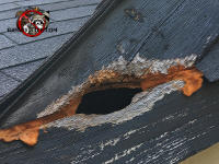 A hole in the fascia board of a roof that someone tried to seal with foam insulation.