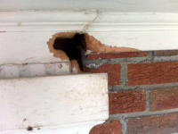 Squirrel hole in trim of house at Dunwoody, GA squirrel control job