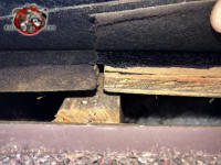 Lifted shingle reveals a gap of a bit over an inch that needs to be sealed to exclude squirrels from the attic of a Birmingham Alabama home.