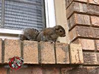 A squirrel sitting on a window sill