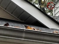 The section of soffit panel near a roof junction at a house in White Georgia is missing and allowed squirrels into the attic