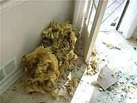Contaminated insulation from rat droppings