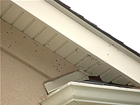 Flies buzzing around a roof soffit adjacent to a dead animal trapped in the home