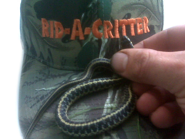 A garter snake on the brim of a Rid-A-Critter ball cap
